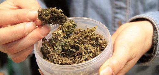 ministero delle Politiche Agricole sulla Canapa Industriale e Cannabis Light