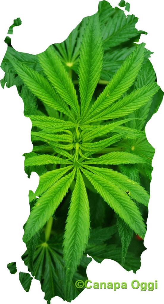 Cannabis Sativa per la bonifica dei terreni contaminati in Sardegna