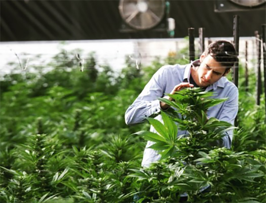 Cannabis terapeutica e start up israeliane BOL breath of life Israele