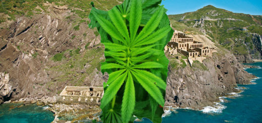 Sardegna fitodepurazione con cannabis sativa, laveria, la marmora, nebida