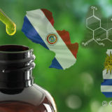 Paraguay Uruguay cannabis terapeutica olio CBD