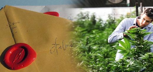 Il bando statale delle polemiche per trovare cannabis terapeutica