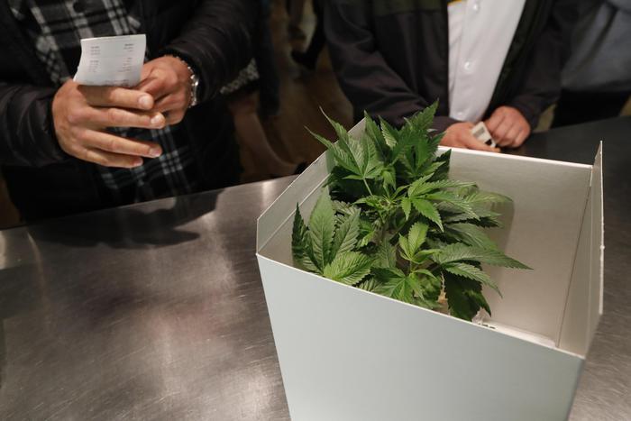 Referendum per la legalizzazione della cannabis in Sardegna