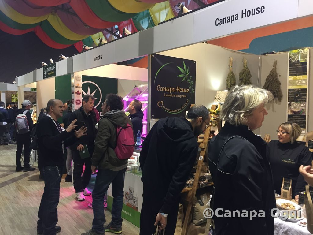 Canapa-Mundi-2018-00015