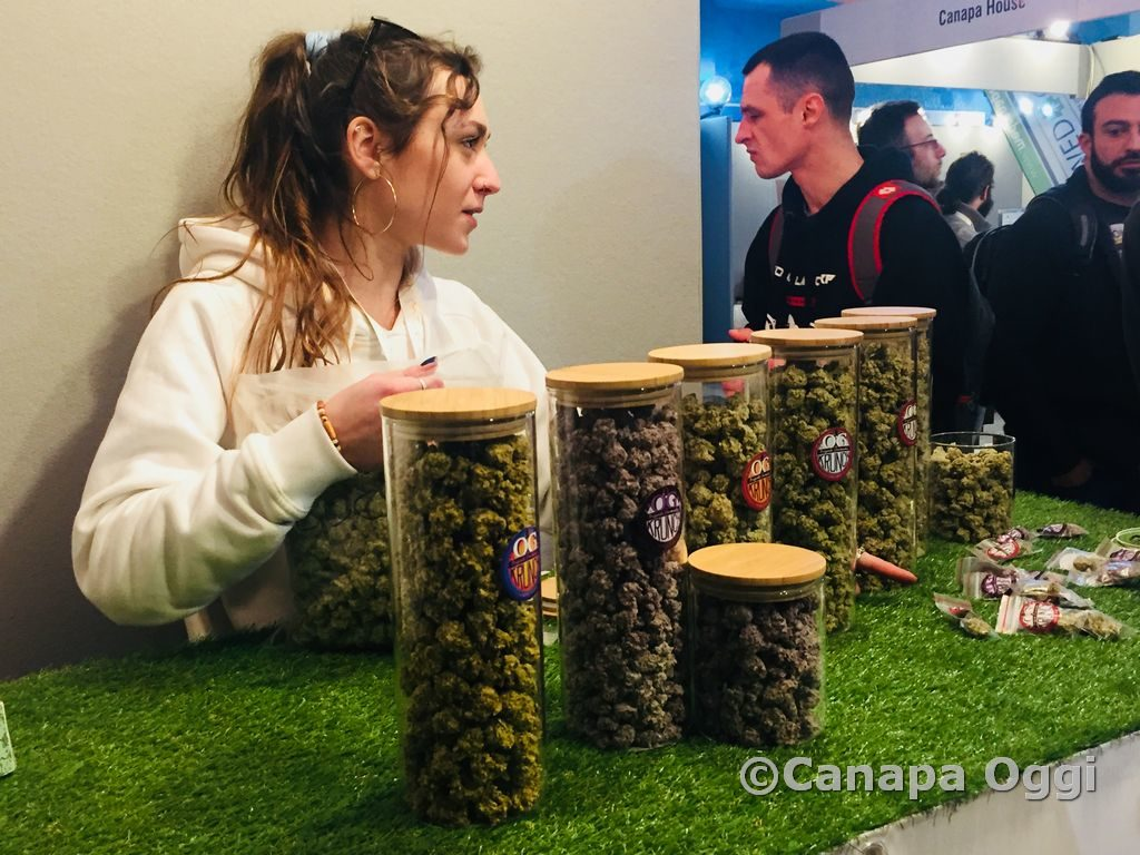 Canapa-Mundi-2018-00033