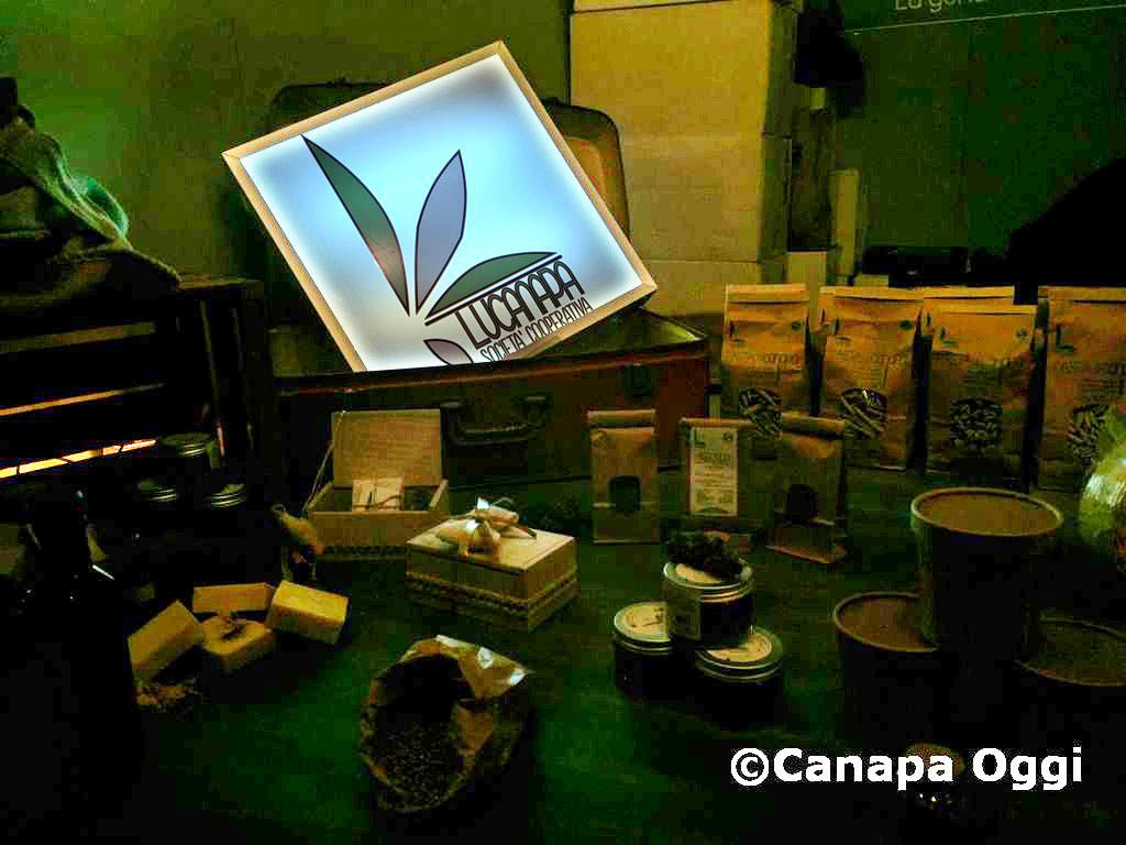 Canapa-Mundi-2018-00076