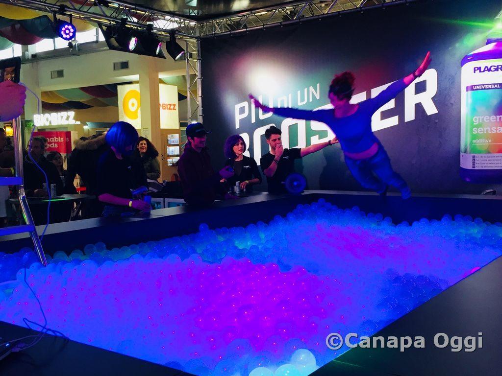 Canapa-Mundi-2018-00162