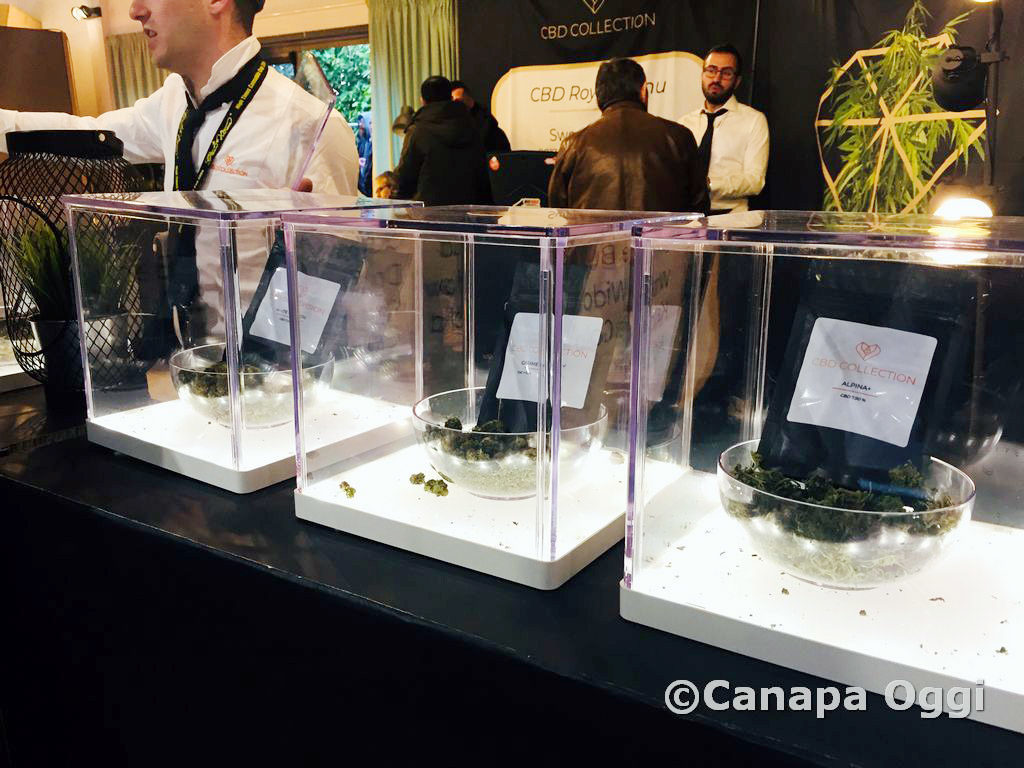 Canapa-Mundi-2018-00180