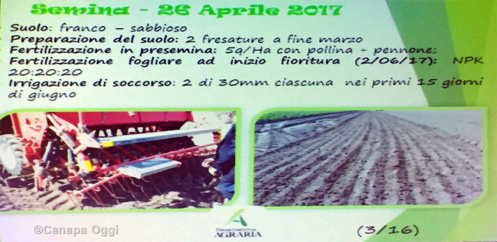 Meccanizzazione nella Canapa Industriale: prove coltivazione per produzione seme