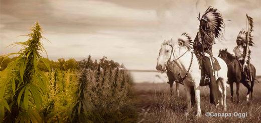 Pellirosse di White Earth fanno Canapa, Minnesota, Stati Uniti