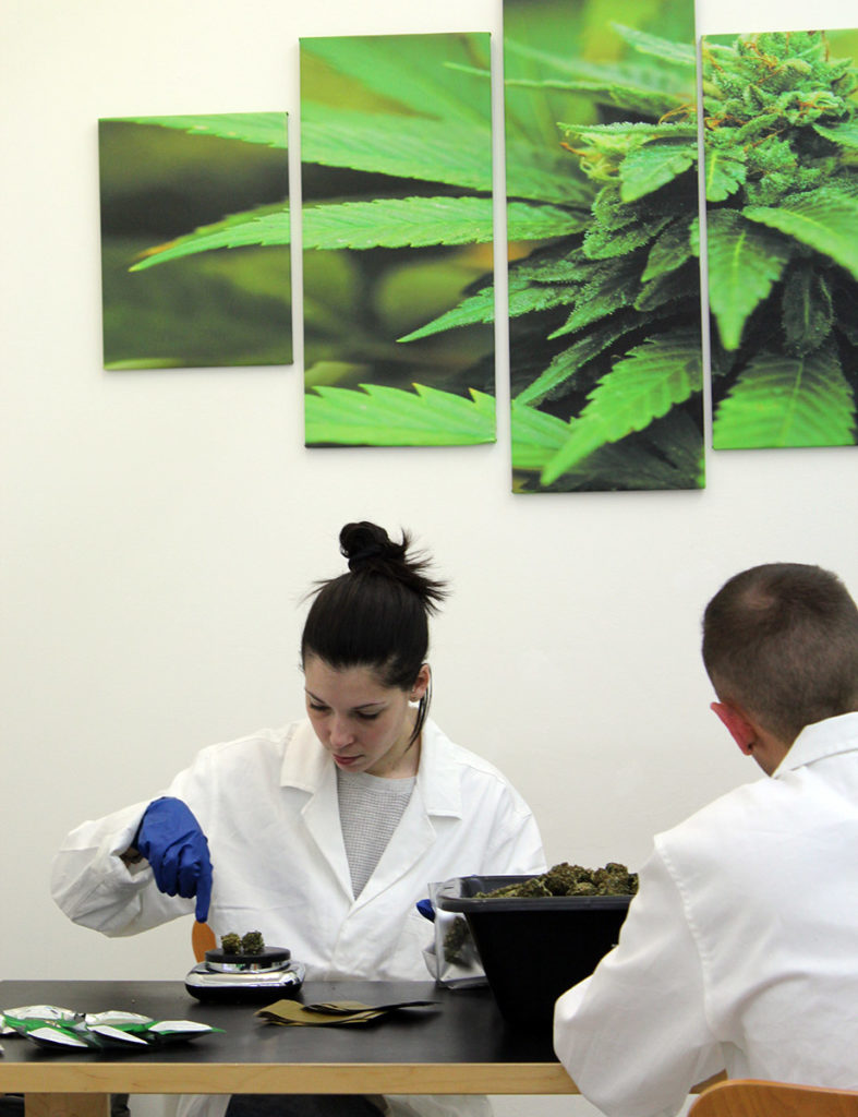Cannabidiol distribution nuova leader per la Cannabis Light-Legale confezionamento