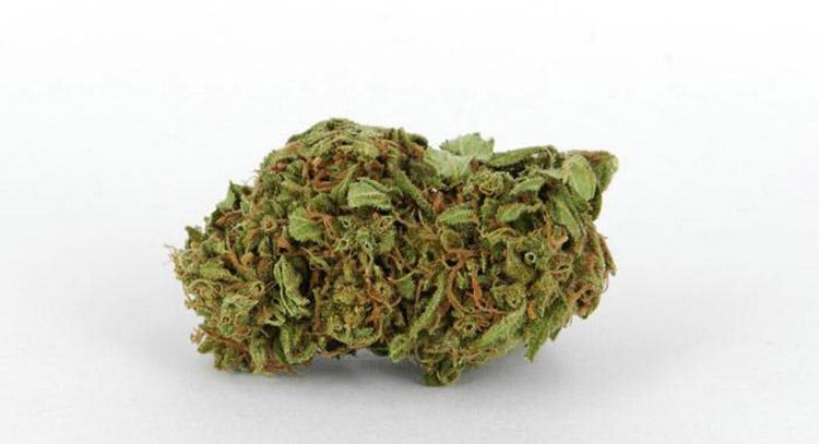 Cannabidiol distribution nuova leader per la Cannabis Light-Legale Orange Bud