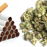 Cannabis Light Codacons chiede al Css di adottare analogo parere per la nicotina