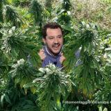 Salvini bandisce la Cannabis Light con THC oltre lo 0,5 per cento