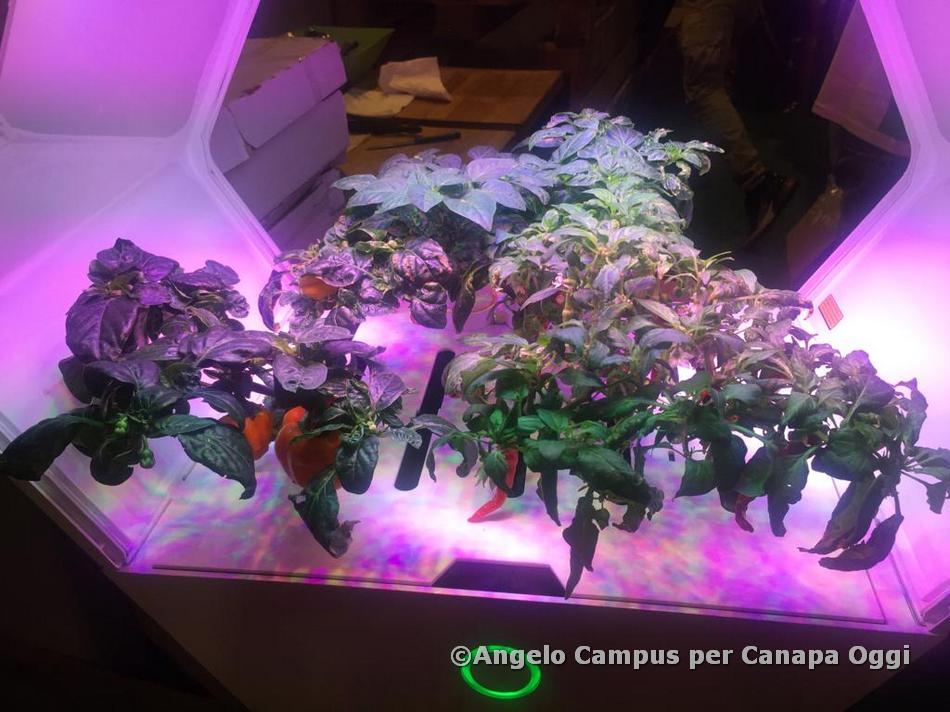 Canapa-Mundi-2019-Canapa-Oggi-06-Angelo-Campus-036