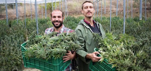 Erba del Chianti un'eccellenza della Canapa in Toscana