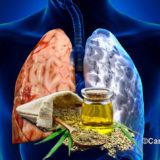 Estratto di olio da Cannabis Sativa antagonista della Bpco