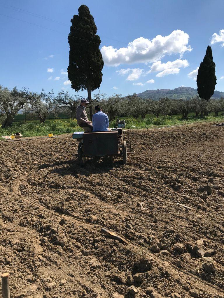 Multicanapa, semina in campo sperimentale dell'azienda Grimaldi